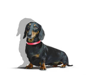 Invest Stanley