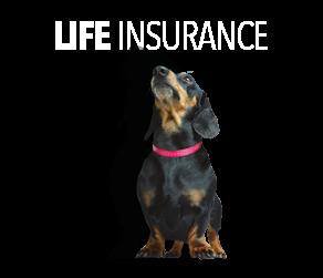 Life insurance Stanley